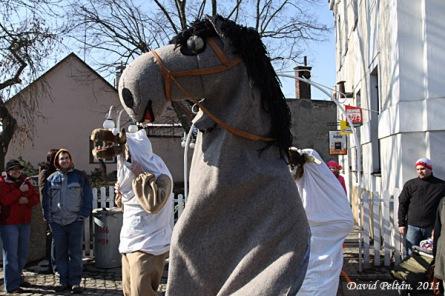 Kůň chtěl ruma, vypily mu ho kozy