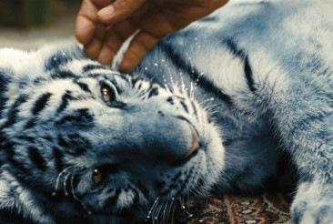 Modrý tygr z Baobabu se uvelebí v kinech. Je to tak trochu jiný film