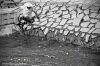 Kachny a kachničky pomáhaly hendikepovaným