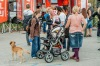 Audiovizuální snění na břehu Vltavy