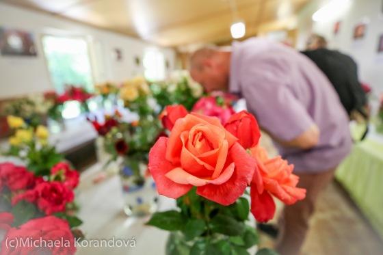 V Táboře se sešly výstavy růží a bonsají. Navštívily je stovky lidí