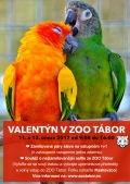 Valentýn v zoo Tábor