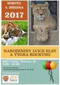 Narozeniny lvice Elsy a tygra Rockyho