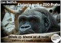 Etologie goril v podmínkách Zoo Praha